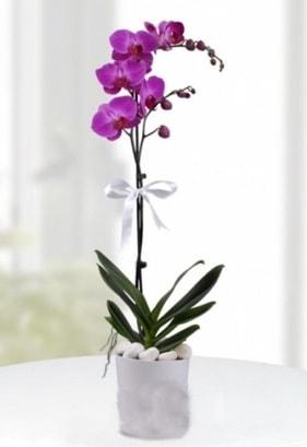 Tek dallı saksıda mor orkide çiçeği  İzmit güvenli kaliteli hızlı çiçek