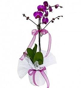 Tek dallı saksıda ithal mor orkide çiçeği  İzmit güvenli kaliteli hızlı çiçek