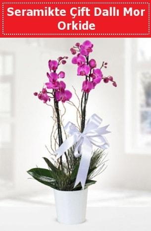 Seramikte Çift Dallı Mor Orkide  İzmit çiçekçi telefonları