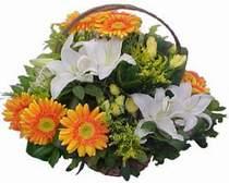 İzmit çiçekçiler  sepet modeli Gerbera kazablanka sepet
